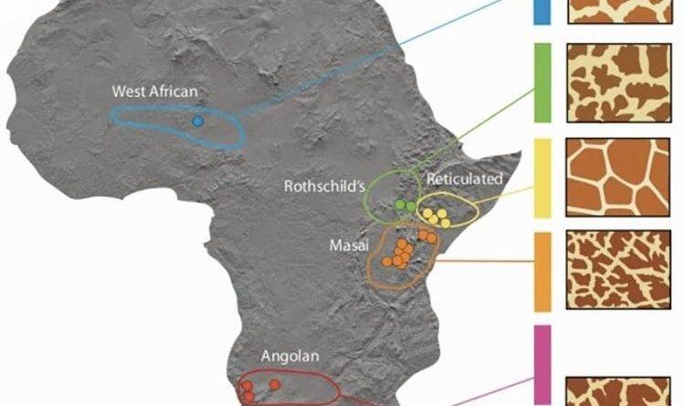 Regional map of giraffes' patterns in Africa
