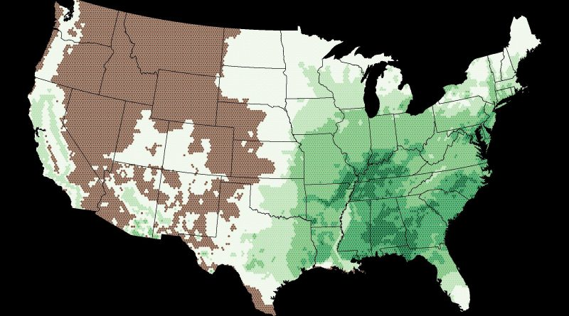 Oaks in the United States