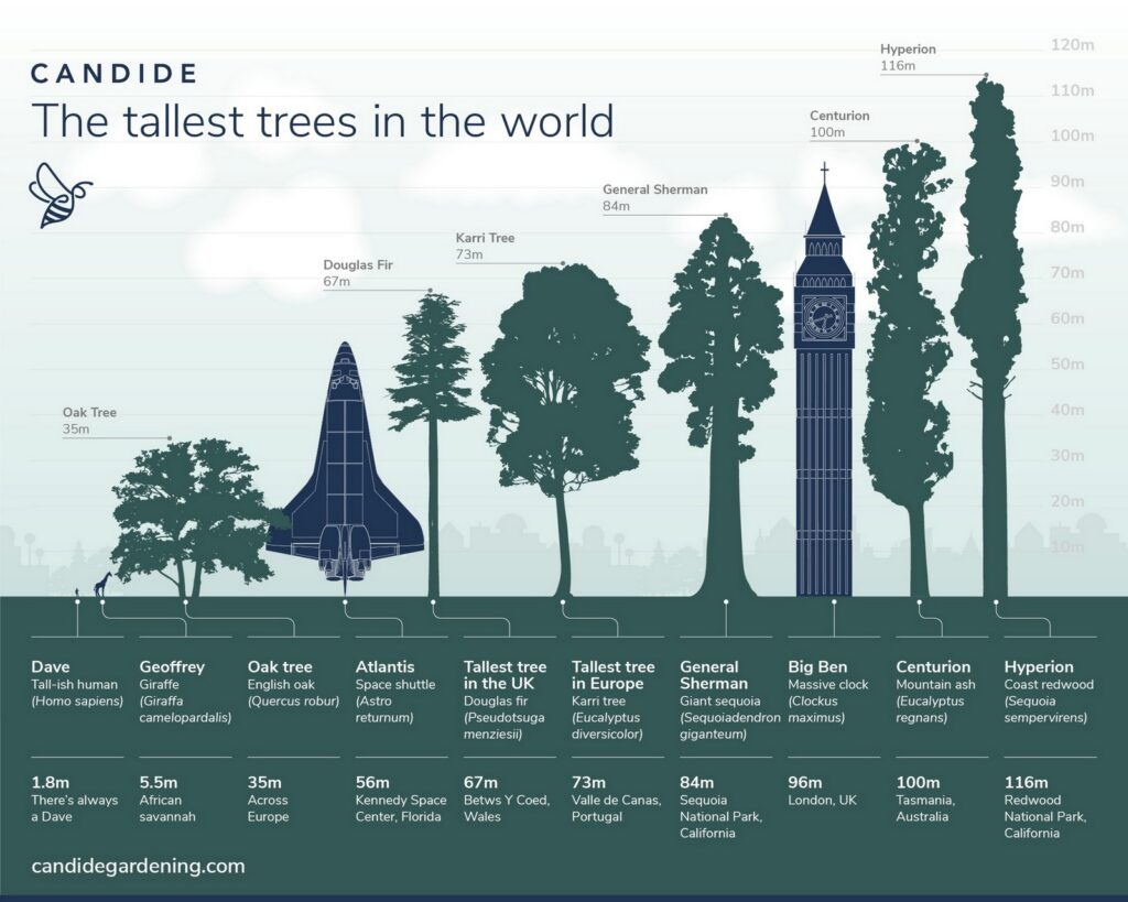 The tallest trees worldwide